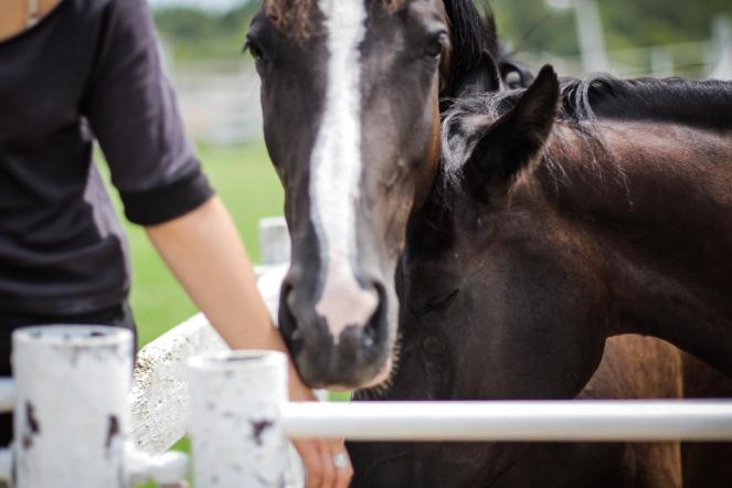 MaggieSnyder-Dark Horses